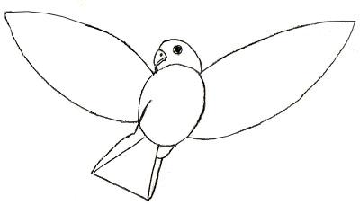 Как рисовать птиц, шаг 4