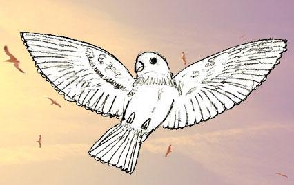 ... птиц | Рисунок птицы карандашом: www.lookmi.ru/kak-risovat-ptic.html