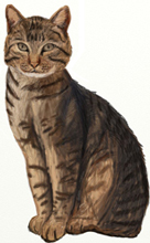 Рисуем Кота шаг за шагом