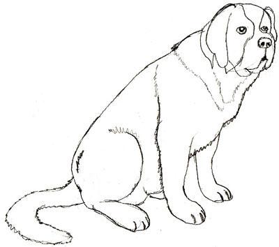 Как рисовать собаку поэтапно, шаг 5