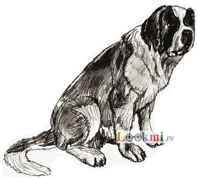 Как рисовать собаку поэтапно, шаг 6