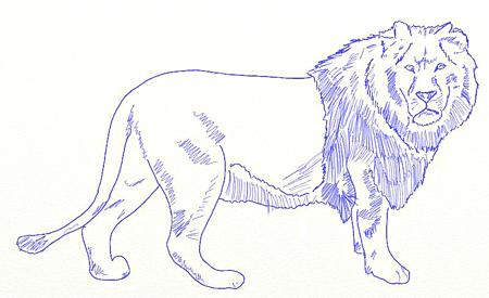 Как нарисовать льва, шаг 5