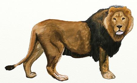 Как нарисовать льва, шаг 6
