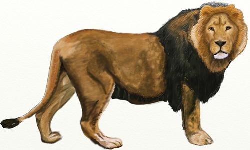 Как нарисовать льва поэтапно