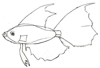 Как рисовать рыбу, шаг 4