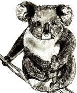 Рисунки животных - Медведь Коала