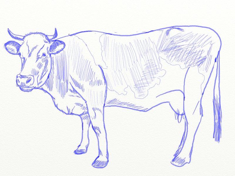 Как нарисовать корову, шаг 7
