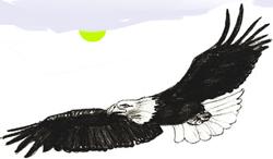 Как научиться рисовать Орла поэтапно