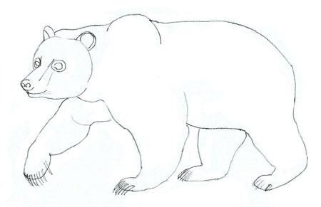 нарисовать медведя карандашом