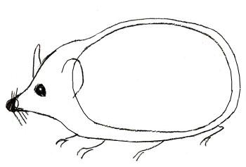 Как нарисовать ежика, шаг 3