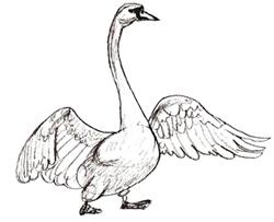 Рисунок лебедя простым карандашом