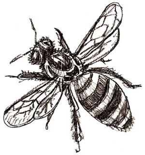 Как нарисовать пчелу, шаг 5
