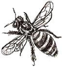 Рисунок пчелы простым карандашом