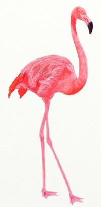 Как нарисовать Фламинго поэтапно