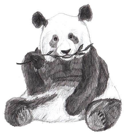 Как нарисовать панду, шаг 6