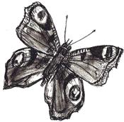 учимся рисовать бабочку