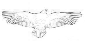 Различия птиц