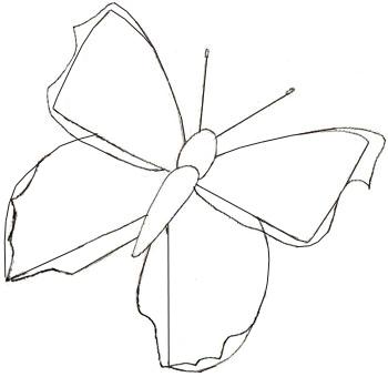 Как нарисовать бабочку, шаг 4