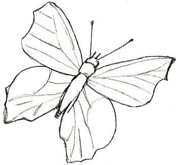 Как нарисовать бабочку, шаг 5