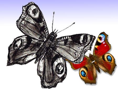 Как на рисовать бабочку поэтапно
