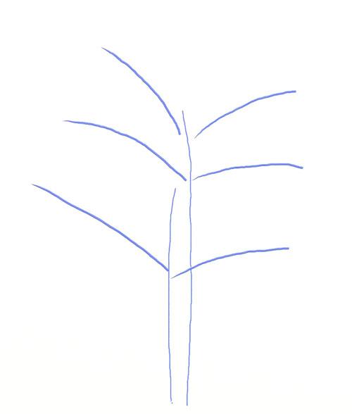 Как нарисовать дерево, шаг 2