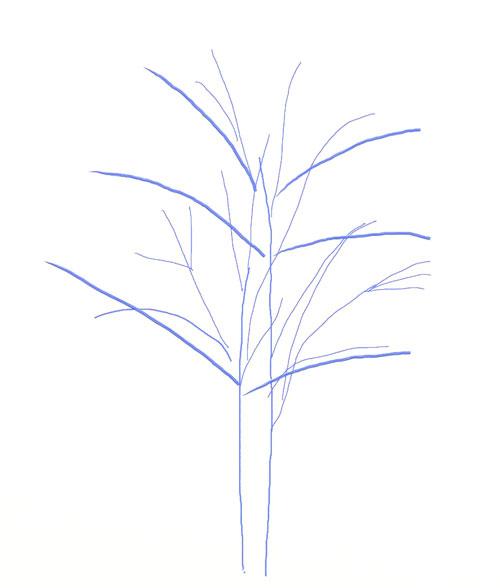 Как нарисовать дерево, шаг 3