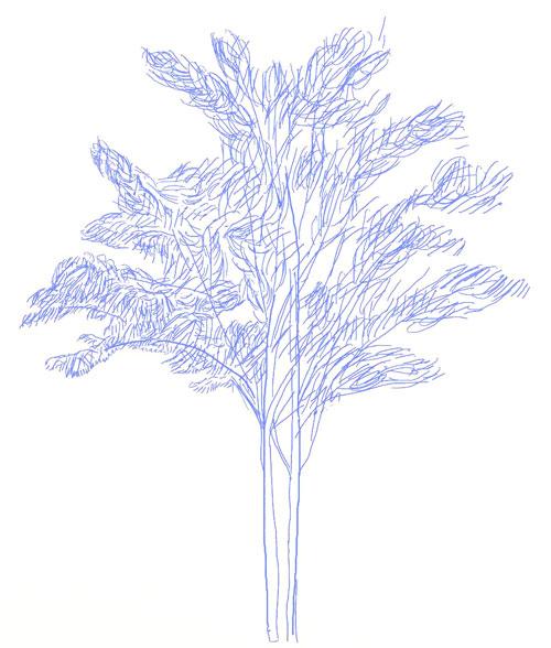 Как нарисовать дерево, шаг 5