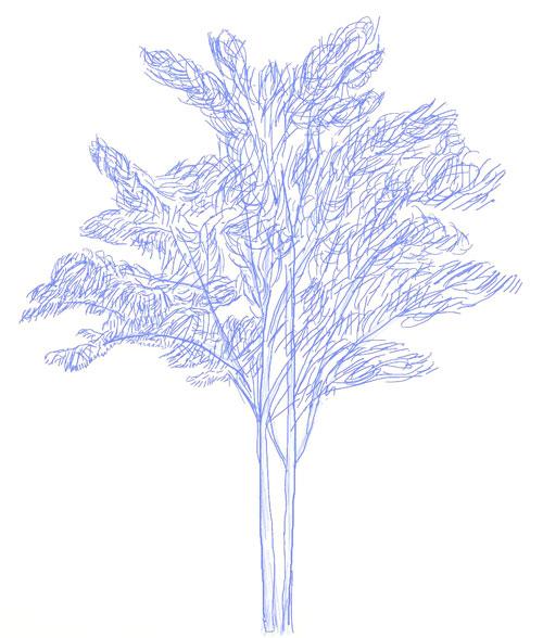 Как нарисовать дерево, шаг 6