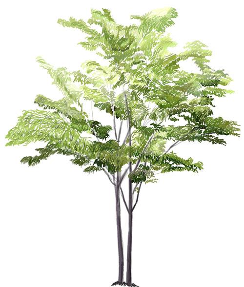 Как нарисовать дерево, шаг 7