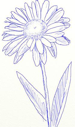 Как нарисовать ромашку, шаг 4